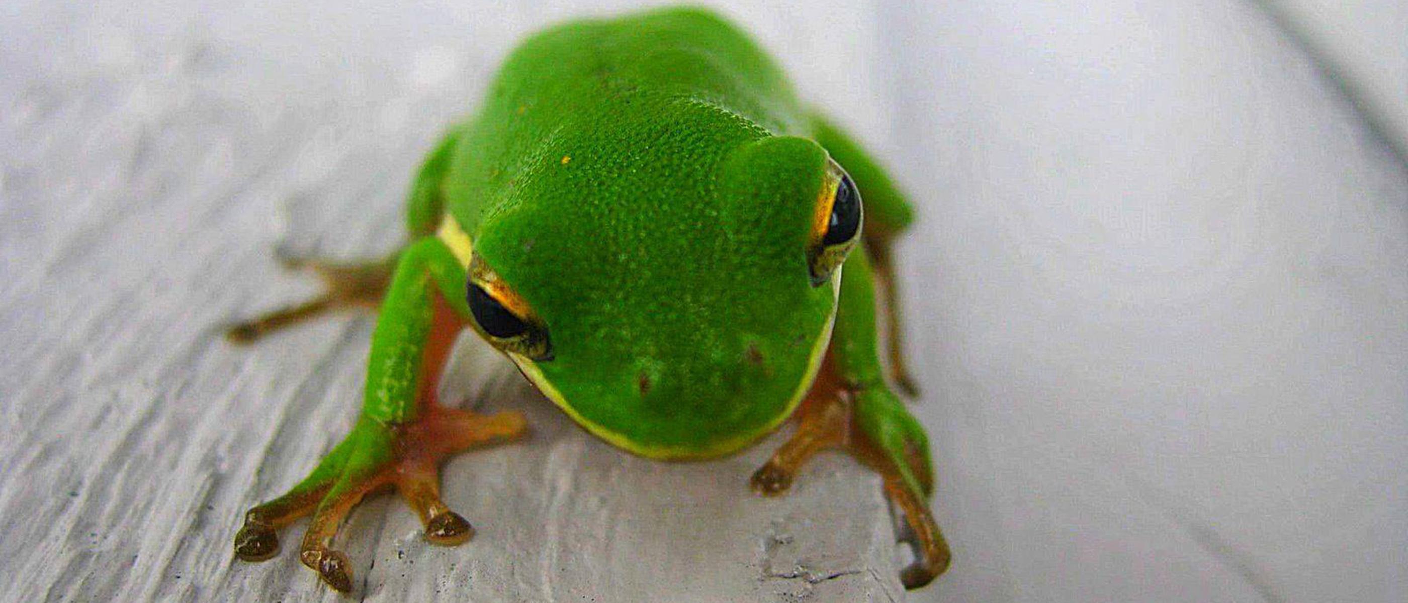 frog_crop2