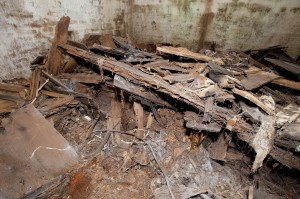 By 2009, the remains buried in Congressional Cemetery's Causten Vault had pancaked. (Photo by Chip Clark / Smithsonian Institution)